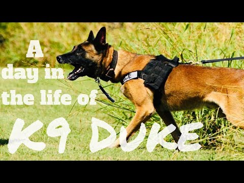 A Day in the Life of K9 Duke
