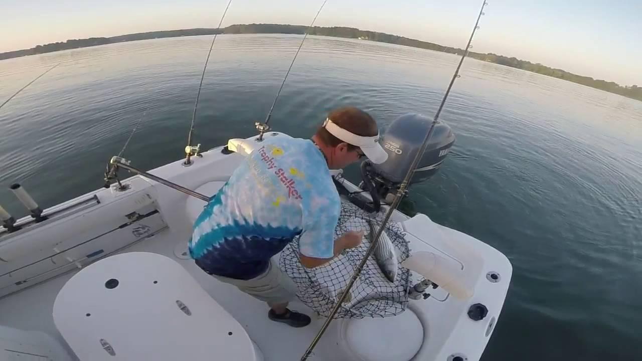 Striper fishing smith mountain lake va 7 23 16 youtube for Smith mountain lake striper fishing
