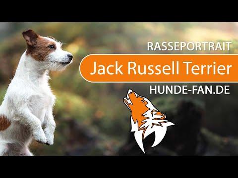 parson jack russel charakter