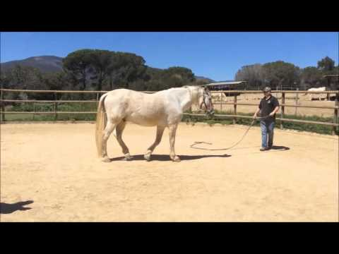 Troubled Dressage Horse Spain