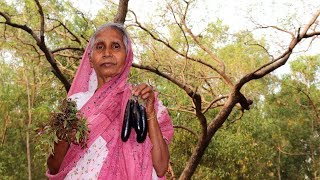 Village Food | Neem Begun- The Best Time to Eat this Recipe in this Session