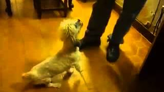 Video: Perro de Boca y Peronista