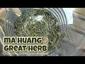 Ma huang ephedra sinica opinia o chinese herb z Aliexpress