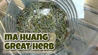 ma huang tea fogyás
