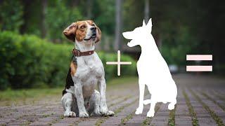 10 Unreal Beagle Cross mixes dog breeds | Beagle cross breeds