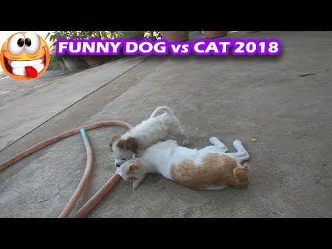 Funny cat Vs Dog,Funniest Pets of the Week Compilation 2018#4