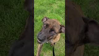 Lola front yard hang out
