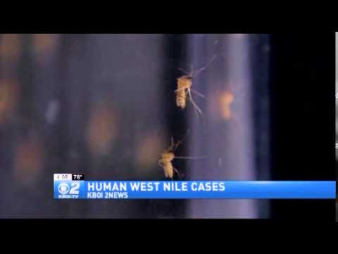 Seven Confirmed Cases of West Nile Virus in Idaho