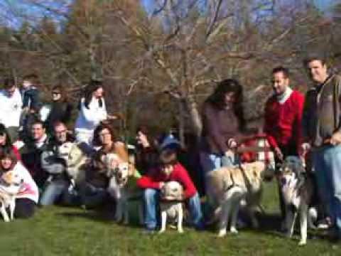 14ª Quedada ProGolden en Resort Canino Can Janè
