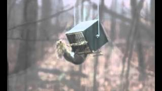 Funny Squirrel Vs Roller Feeder