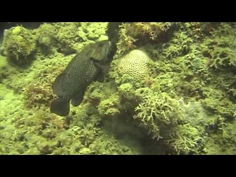Plongées à la Martinique