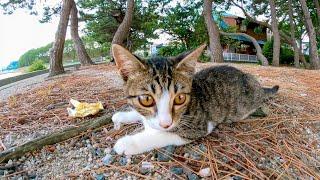 海沿いの道で見掛けた子猫が可愛過ぎる