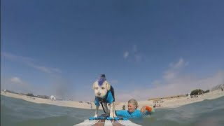 Scooter the surfing dog  from the streets to the surf board (UK)  ITV News  8th September 2020