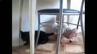 Приколы с кошками, кошки и дети, малыш хватает кошку за хвост!
