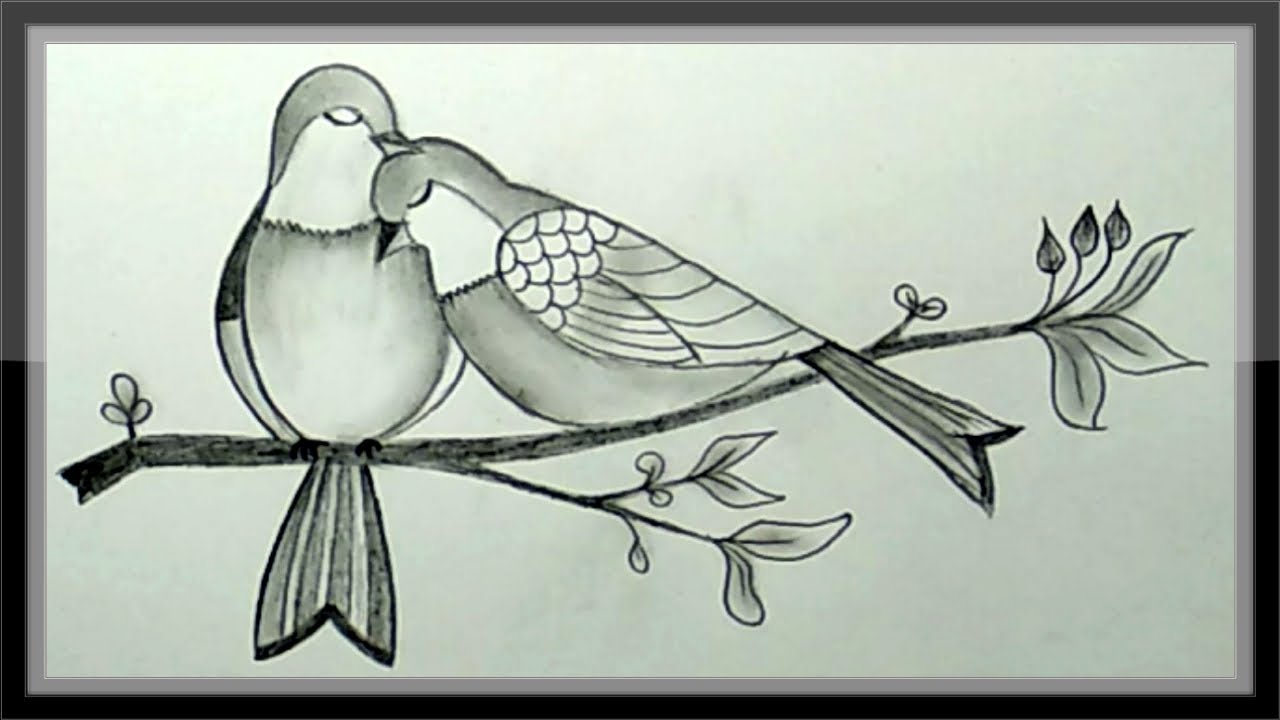 Pencil drawing how to draw a pair of beautiful birds