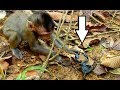 OMG ! Brave Orphan Baby Lizza & Coper Catch A Big Scorpion, Not Scare At All | Both Are Bitten