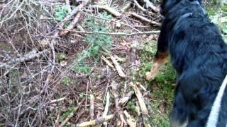 Cadaver Dog Training With Kali