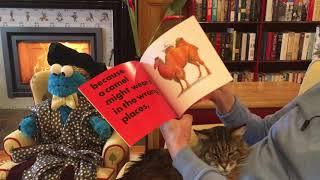 Animals Should Definitely NOT Wear Clothing by Judi Barrett (Ron Barrett, ill.)