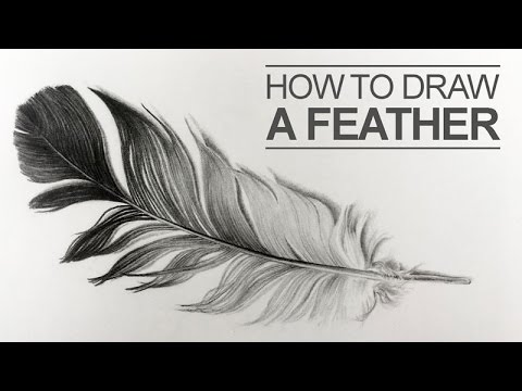 how to draw a feather youtube. Black Bedroom Furniture Sets. Home Design Ideas