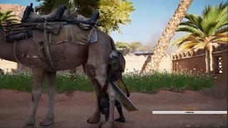 Спаривание человека и верблюда