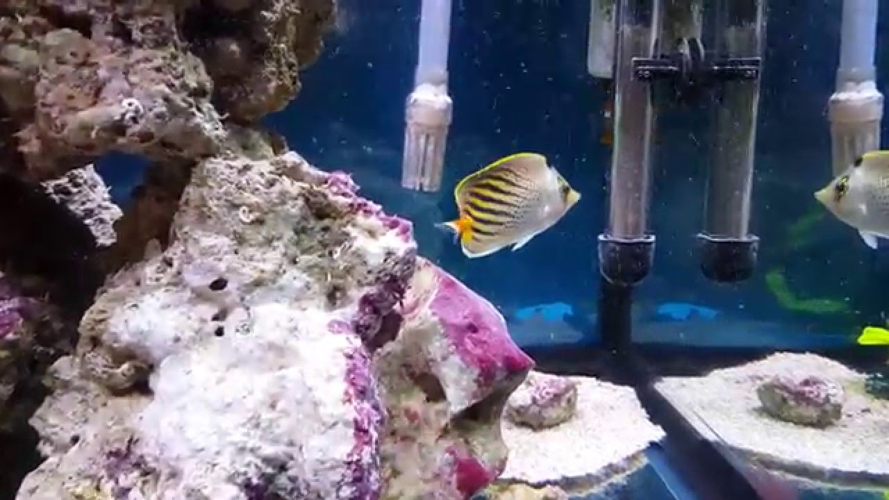 4K UHD Fish tank Video   YouTube