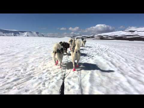 Dog Sledding in Iceland