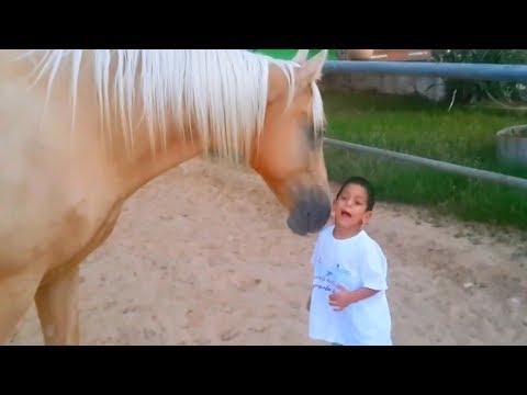 Der Junge Hat Das Williams Syndrom - Schau Was Das Pferd Mit Ihm Macht...