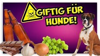 Giftig für Hunde! Diese Sachen dürfen dem Hund nicht verfüttert werden! thumbnail
