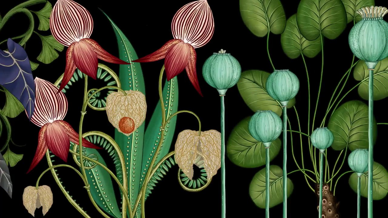 Animated Botanical Wallpaper By James Paulley Katie Scott