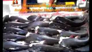 Indian Basa Video.flv