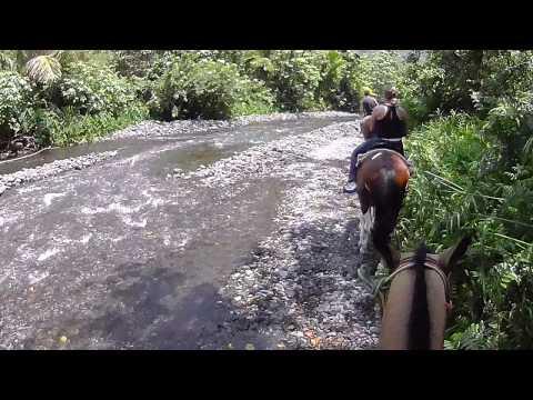 HAWAII BIG ISLAND WAIPIO VALLEY HORSEBACK TOUR 2013 5