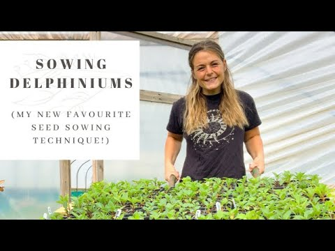 SOWING DELPHINIUM SEEDS   foolproof seed starting technique   FLOWER FARM VLOG   kitchen roll method