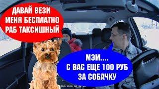 Пассажир с дорогой собакой в такси зажал оплату 100руб