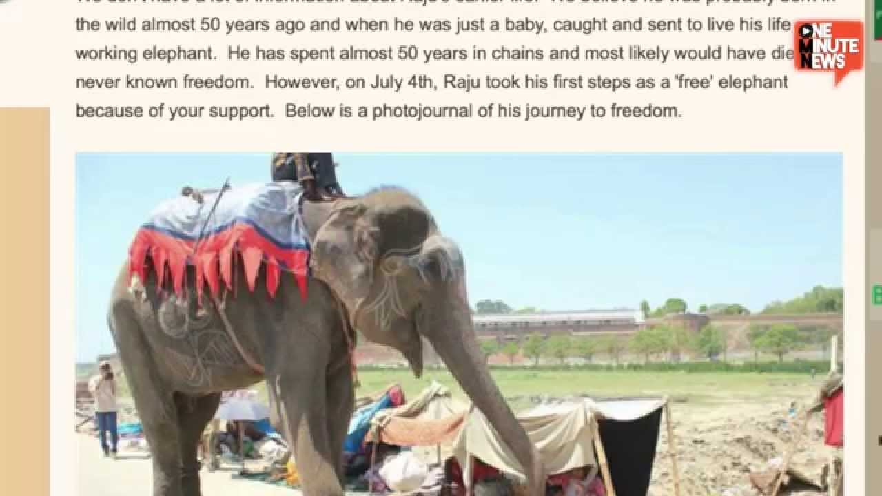 freeed elphant after 50 years