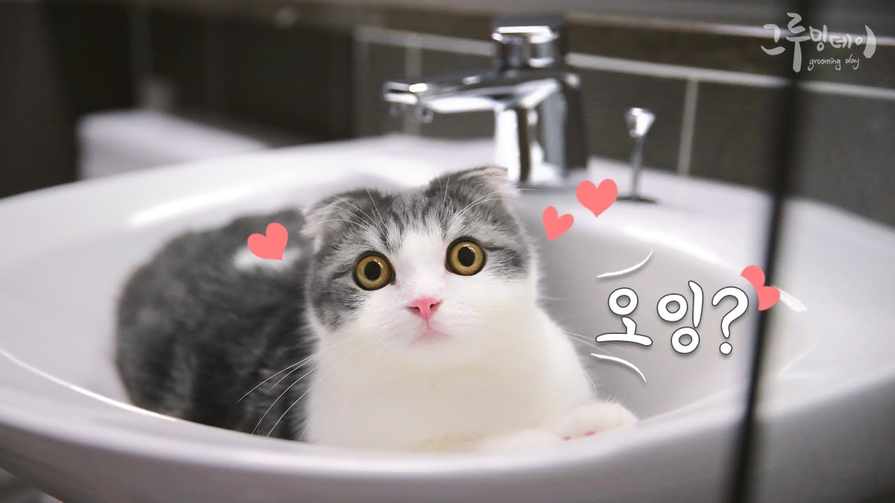 고양이가 화장실에 들어오면 생기는 일?