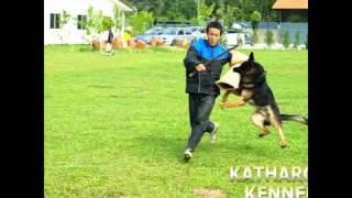 Kathargo Kenel -  Ipo Schutzhund Attack 2, Malaysia