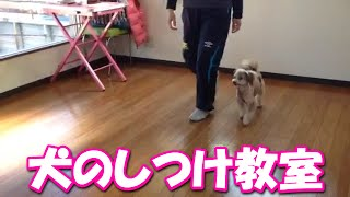 ホームページはhttp://www.icemilkcandy.com/ ドッグラン完備。 大阪市...