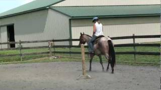 AQHA Bay Roan 3 year old Mare For Sale in PA