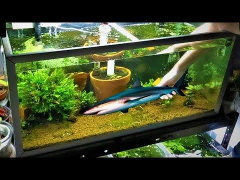 Shrimp And Fish Tank Mates