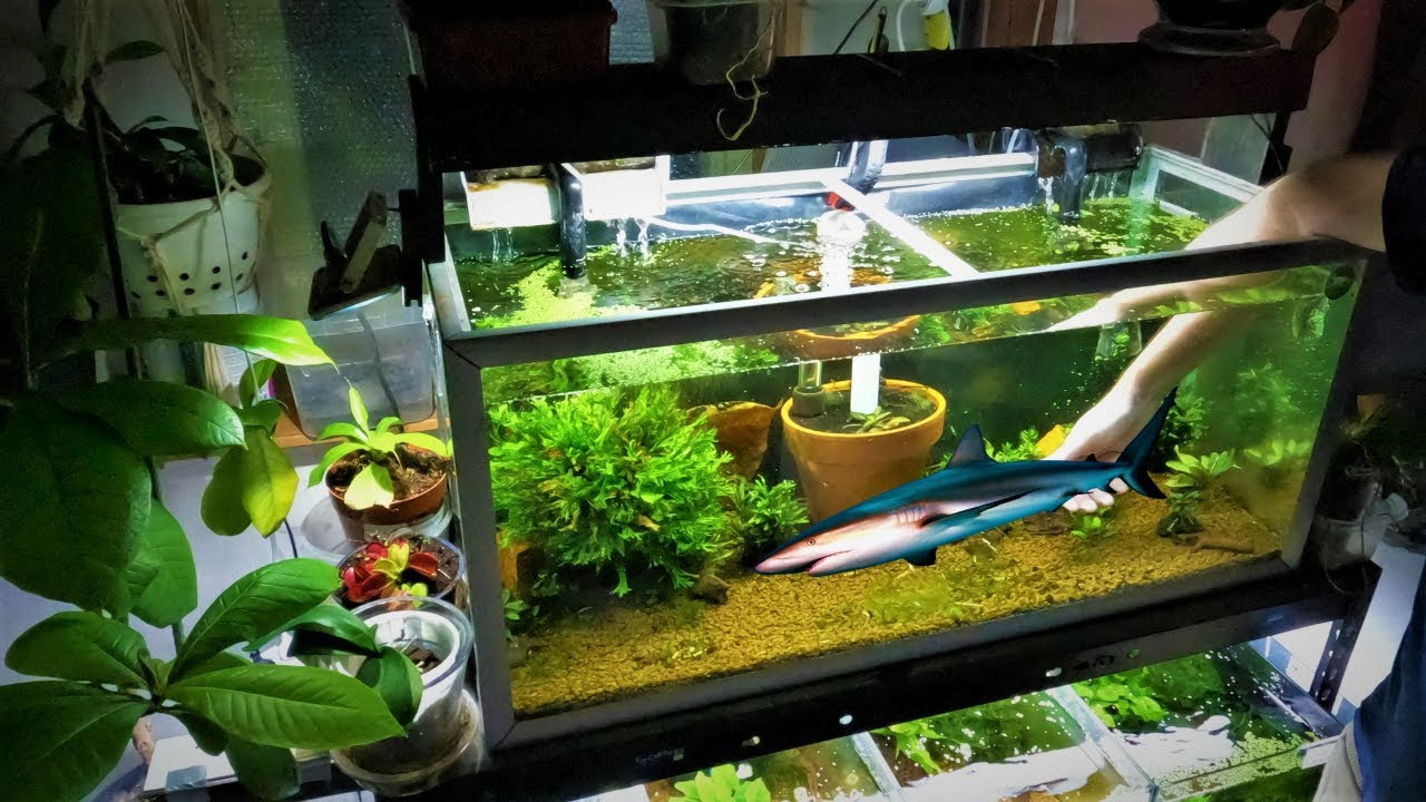 Shrimp And Fish - THE TRUTH