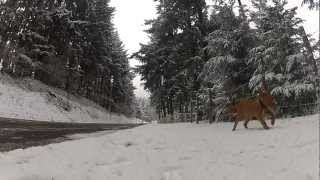 Gopro Hd2 Dog's In The Snow!