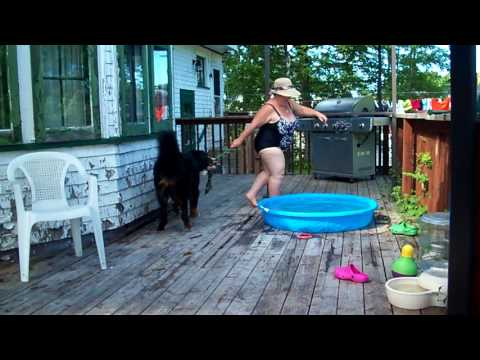 Max our Bernese Mountain Dog deck dancing with Tonya