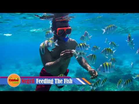 Negril Glass Bottom Boat Ride Jamaica