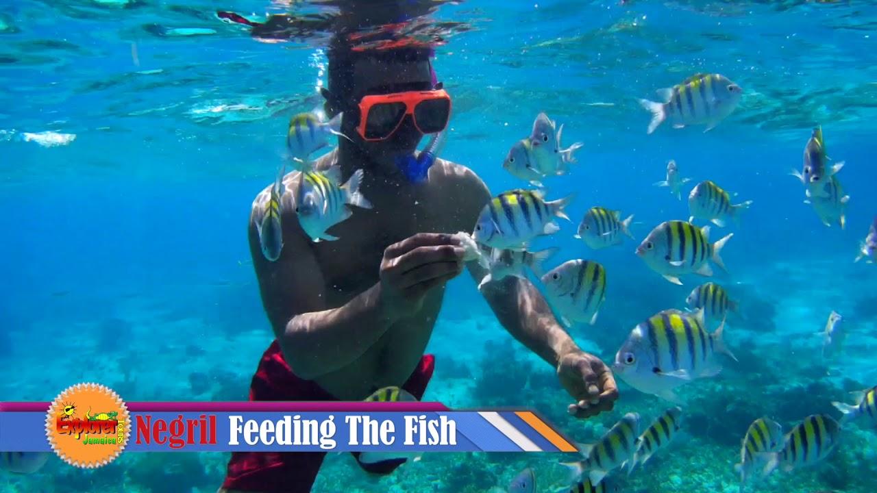 Glass Bottom Boat Ride Negril Jamaica - YouTube