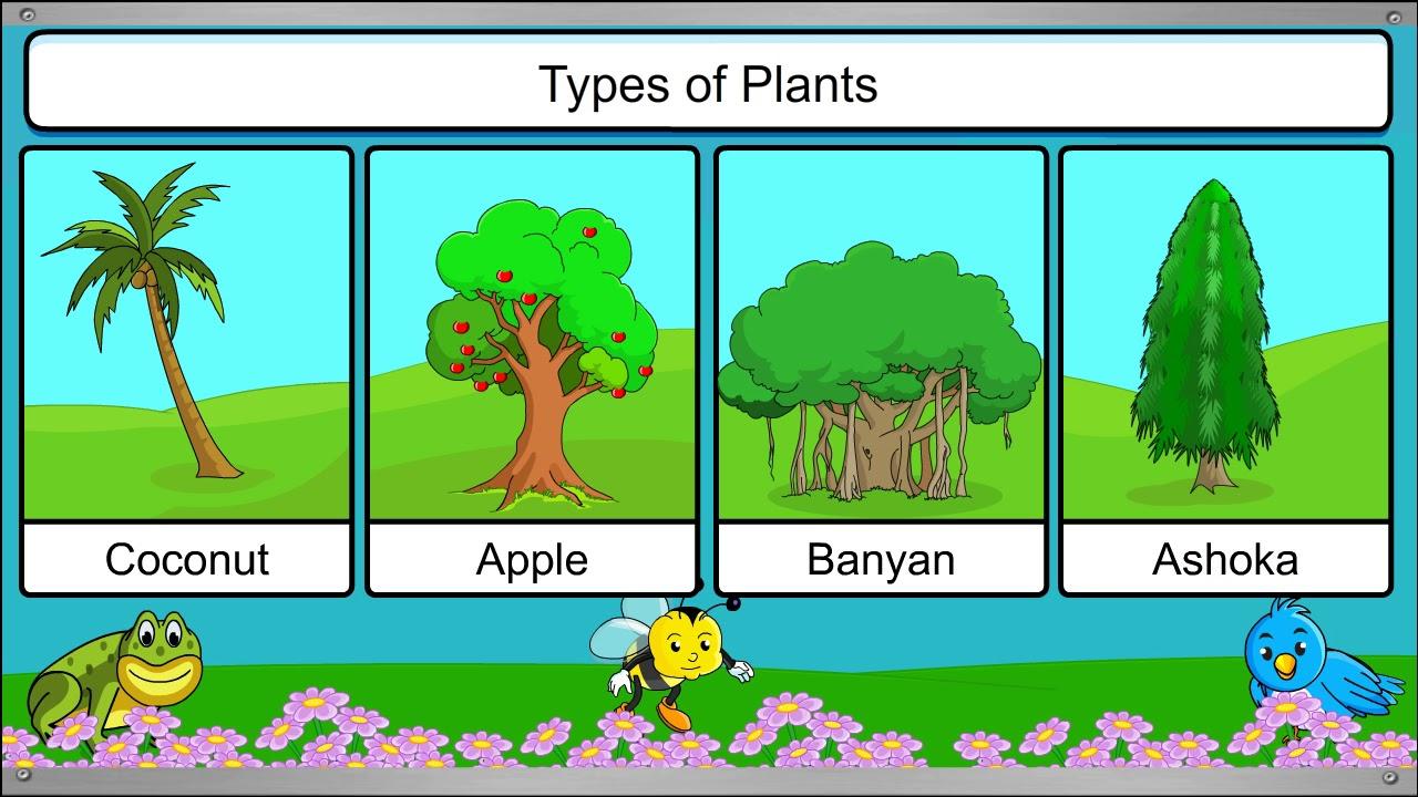Teachnext Cbse Grade 1 Science Types Of Plants Youtube