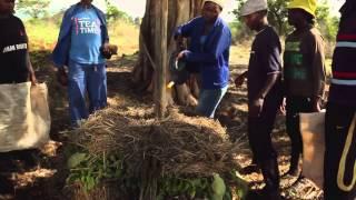 Black Gold: The Secrets of Compost,  Garden Africa