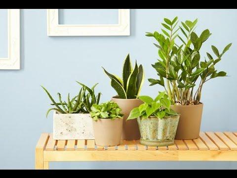 🏵 Естественная красота комнатных растений: как подобрать лучший вариант по фото и названию