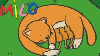 Milo ve anne kedi | Karikatür çocuklar