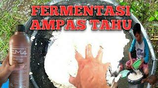 Cara fermentasi ampas tahu dengan em4 dan gula merah