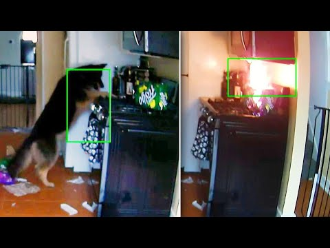 Otis - Dog Turns On Stove - Fire Ignites - Soda Explodes